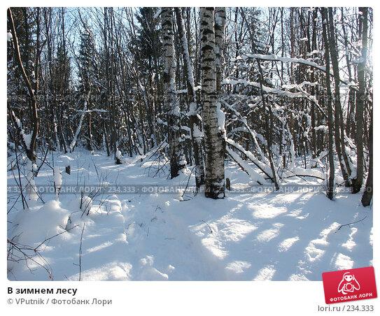 В зимнем лесу, фото № 234333, снято 12 февраля 2007 г. (c) VPutnik / Фотобанк Лори