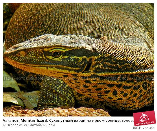Купить «Varanus, Monitor lizard. Сухопутный варан на ярком солнце, голова и шея крупно», фото № 33345, снято 20 июня 2006 г. (c) Eleanor Wilks / Фотобанк Лори