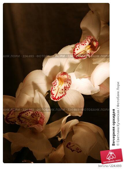 Вечерняя орхидея, фото № 224693, снято 23 марта 2017 г. (c) Светлана Кучинская / Фотобанк Лори