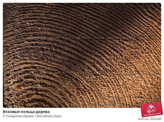 Вековые кольца дерева, фото № 324645, снято 13 июня 2008 г. (c) Смирнова Ирина / Фотобанк Лори
