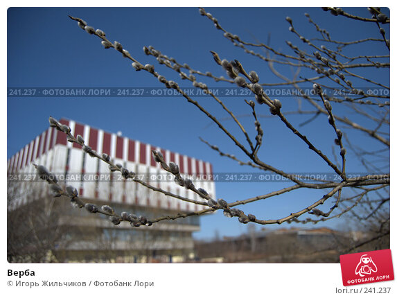 Верба, фото № 241237, снято 1 апреля 2008 г. (c) Игорь Жильчиков / Фотобанк Лори