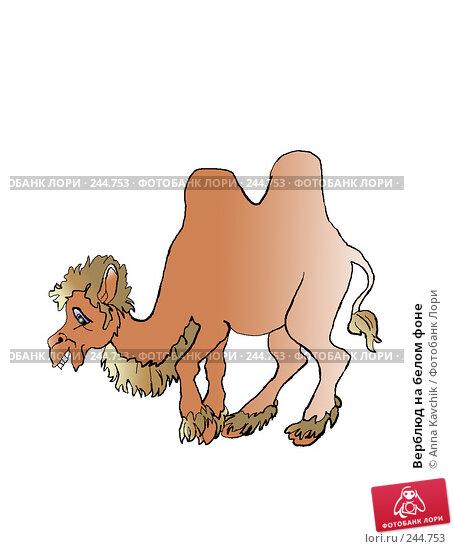 Верблюд на белом фоне, иллюстрация № 244753 (c) Anna Kavchik / Фотобанк Лори