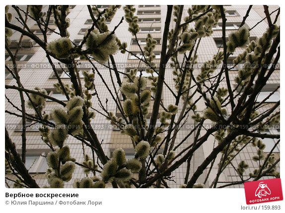 Вербное воскресение, фото № 159893, снято 7 апреля 2007 г. (c) Юлия Паршина / Фотобанк Лори