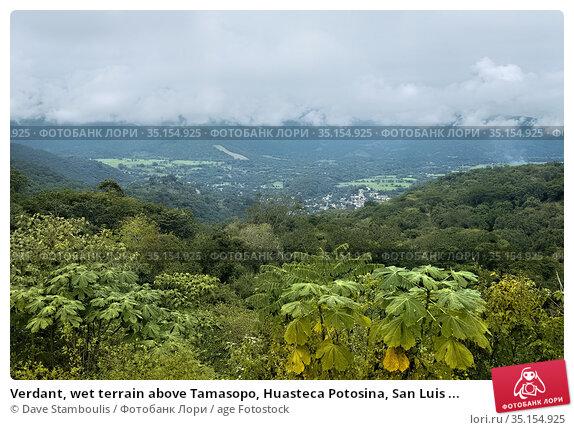 Verdant, wet terrain above Tamasopo, Huasteca Potosina, San Luis ... Стоковое фото, фотограф Dave Stamboulis / age Fotostock / Фотобанк Лори