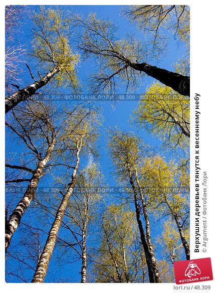 Верхушки деревьев тянутся к весеннему небу, фото № 48309, снято 22 мая 2005 г. (c) Argument / Фотобанк Лори