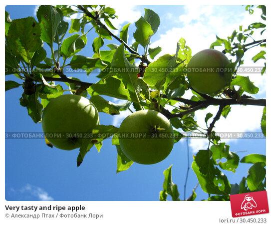 Very tasty and ripe apple. Стоковое фото, фотограф Александр Птах / Фотобанк Лори