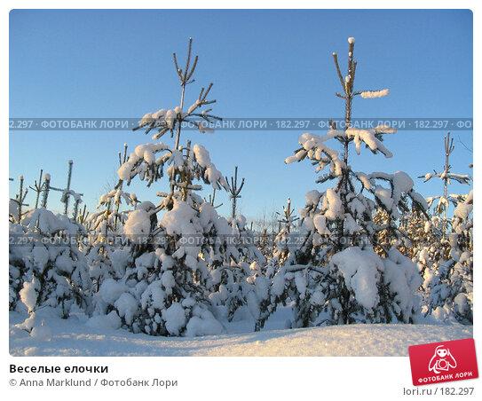 Веселые елочки, фото № 182297, снято 15 января 2005 г. (c) Anna Marklund / Фотобанк Лори