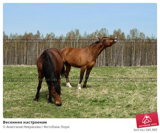 Весеннее настроение, фото № 241941, снято 7 мая 2007 г. (c) Анастасия Некрасова / Фотобанк Лори