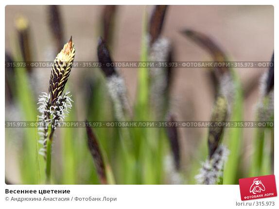 Весеннее цветение, фото № 315973, снято 29 апреля 2008 г. (c) Андрюхина Анастасия / Фотобанк Лори