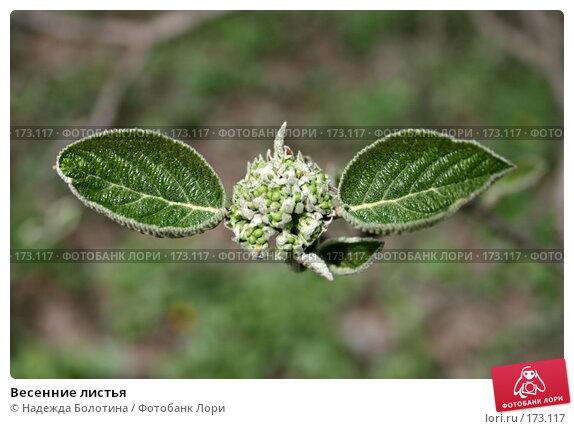 Весенние листья, фото № 173117, снято 28 апреля 2007 г. (c) Надежда Болотина / Фотобанк Лори