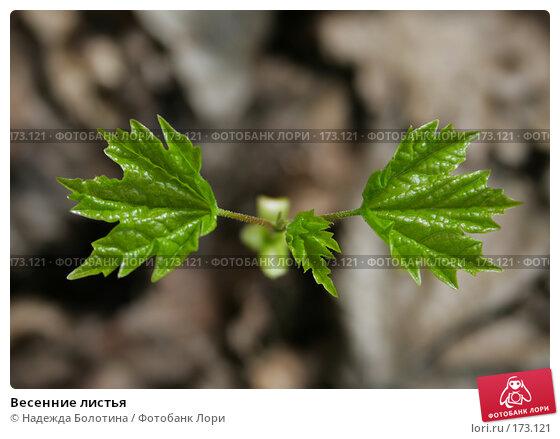 Весенние листья, фото № 173121, снято 28 апреля 2007 г. (c) Надежда Болотина / Фотобанк Лори
