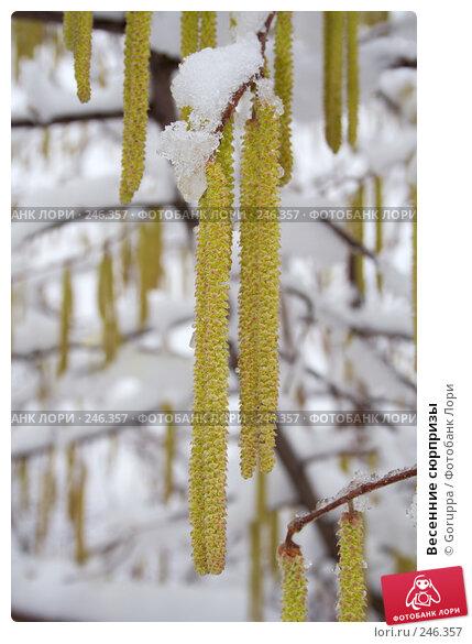 Весенние сюрпризы, фото № 246357, снято 28 января 2007 г. (c) Goruppa / Фотобанк Лори