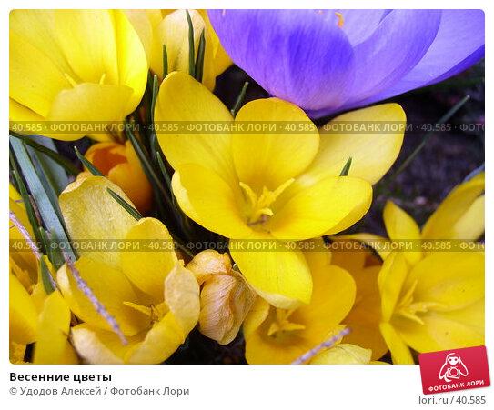 Весенние цветы, фото № 40585, снято 18 апреля 2007 г. (c) Удодов Алексей / Фотобанк Лори