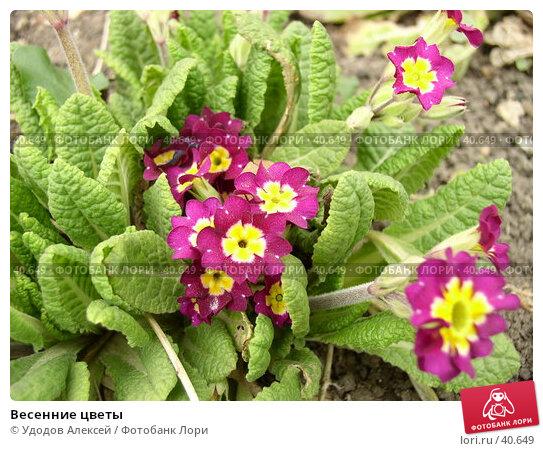 Весенние цветы, фото № 40649, снято 18 апреля 2007 г. (c) Удодов Алексей / Фотобанк Лори