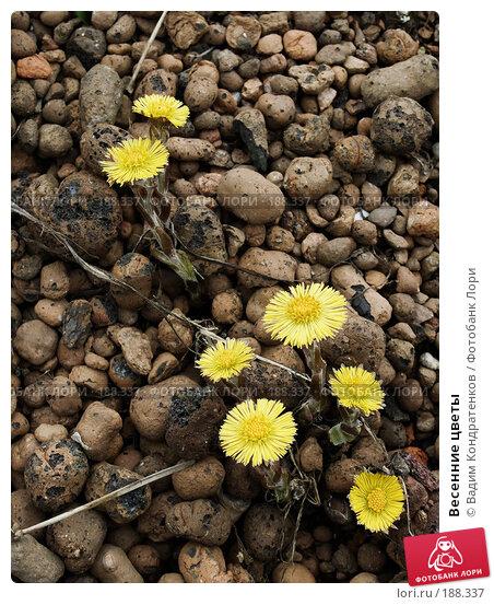 Весенние цветы, фото № 188337, снято 27 марта 2017 г. (c) Вадим Кондратенков / Фотобанк Лори