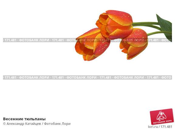 Весенние тюльпаны, фото № 171481, снято 25 апреля 2007 г. (c) Александр Катайцев / Фотобанк Лори
