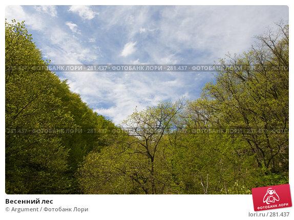 Весенний лес, фото № 281437, снято 28 апреля 2008 г. (c) Argument / Фотобанк Лори