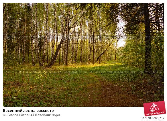 Весенний лес на рассвете, фото № 283717, снято 2 мая 2008 г. (c) Литова Наталья / Фотобанк Лори