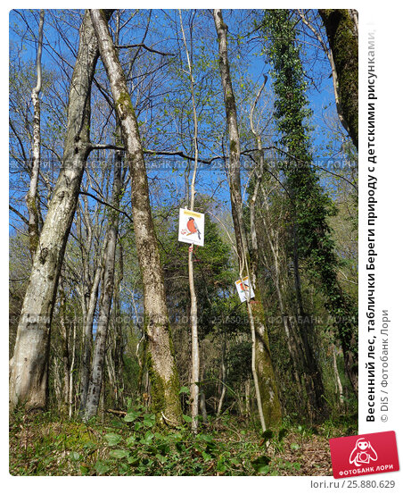 Купить «Весенний лес, таблички Береги природу с детскими рисунками, Кавказский заповедник», фото № 25880629, снято 31 марта 2017 г. (c) DiS / Фотобанк Лори