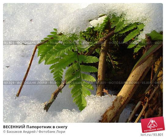 ВЕСЕННИЙ Папоротник в снегу, фото № 93801, снято 14 декабря 2005 г. (c) Баскаков Андрей / Фотобанк Лори