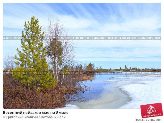 Купить «Весенний пейзаж в мае на Ямале», фото № 7467805, снято 23 мая 2015 г. (c) Григорий Писоцкий / Фотобанк Лори