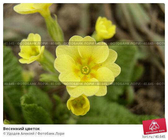 Купить «Весенний цветок», фото № 40645, снято 18 апреля 2007 г. (c) Удодов Алексей / Фотобанк Лори
