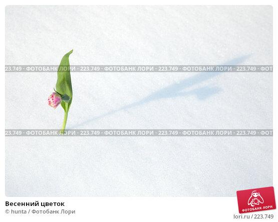 Купить «Весенний цветок», фото № 223749, снято 8 марта 2008 г. (c) hunta / Фотобанк Лори
