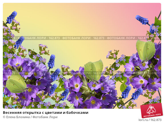 Весенняя открытка с цветами и бабочками, фото № 162873, снято 23 июля 2017 г. (c) Елена Блохина / Фотобанк Лори