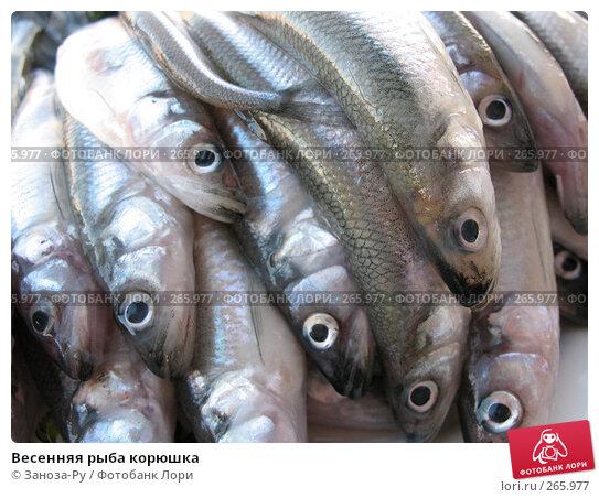 Весенняя рыба корюшка, фото № 265977, снято 22 апреля 2008 г. (c) Заноза-Ру / Фотобанк Лори