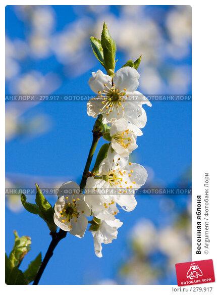 Купить «Весенняя яблоня», фото № 279917, снято 30 апреля 2008 г. (c) Argument / Фотобанк Лори