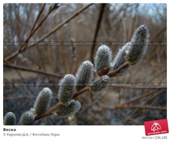 Весна, фото № 236245, снято 29 марта 2008 г. (c) Карелин Д.А. / Фотобанк Лори