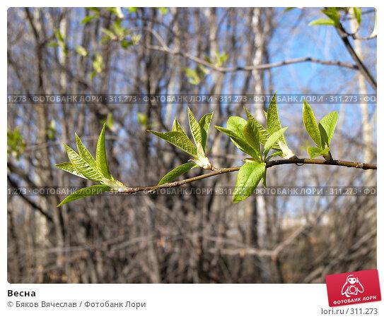 Весна, фото № 311273, снято 27 апреля 2008 г. (c) Бяков Вячеслав / Фотобанк Лори