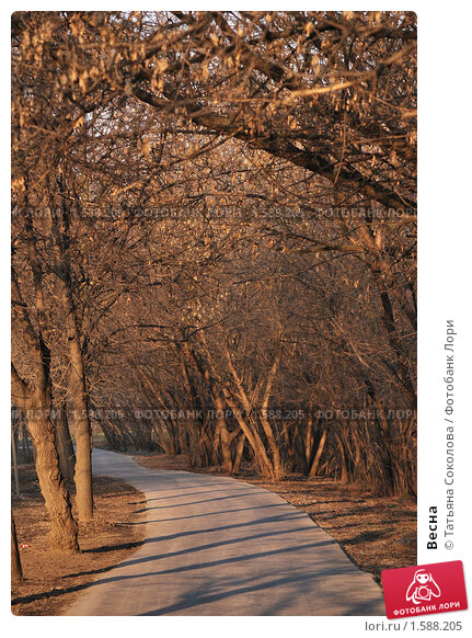 Весна. Стоковое фото, фотограф Татьяна Соколова / Фотобанк Лори