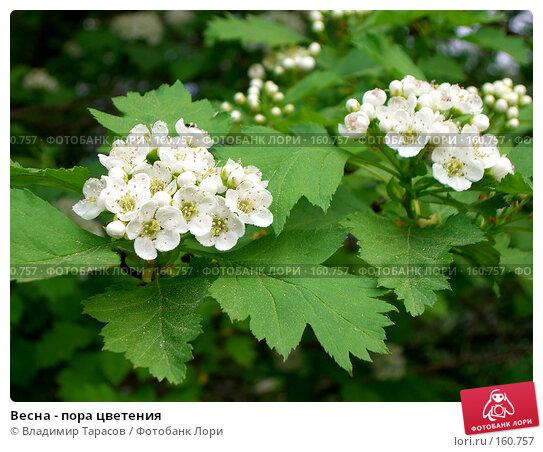 Весна - пора цветения, фото № 160757, снято 21 мая 2007 г. (c) Владимир Тарасов / Фотобанк Лори