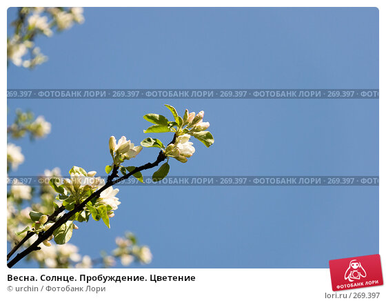 Купить «Весна. Солнце. Пробуждение. Цветение», фото № 269397, снято 29 апреля 2008 г. (c) urchin / Фотобанк Лори