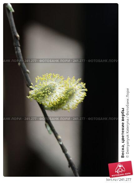 Весна, цветение вербы, фото № 241277, снято 27 марта 2008 г. (c) Demyanyuk Kateryna / Фотобанк Лори