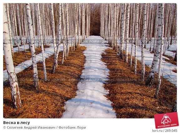 Весна в лесу, фото № 269045, снято 11 апреля 2008 г. (c) Селигеев Андрей Иванович / Фотобанк Лори