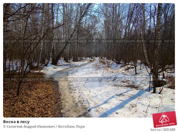 Весна в лесу, фото № 269049, снято 11 апреля 2008 г. (c) Селигеев Андрей Иванович / Фотобанк Лори
