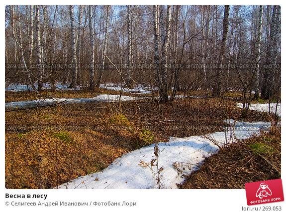 Купить «Весна в лесу», фото № 269053, снято 11 апреля 2008 г. (c) Селигеев Андрей Иванович / Фотобанк Лори