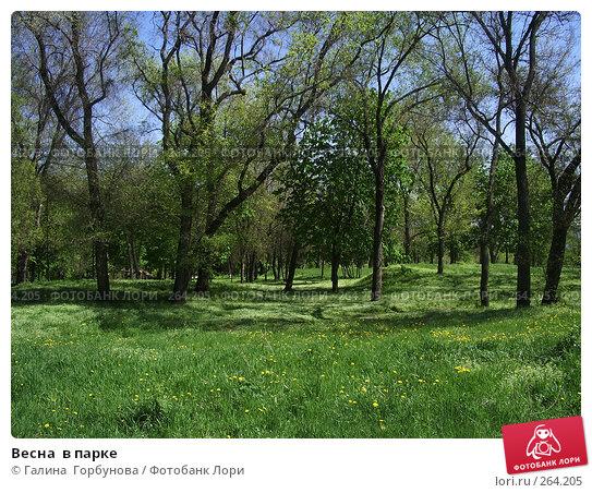 Купить «Весна  в парке», фото № 264205, снято 24 апреля 2007 г. (c) Галина  Горбунова / Фотобанк Лори