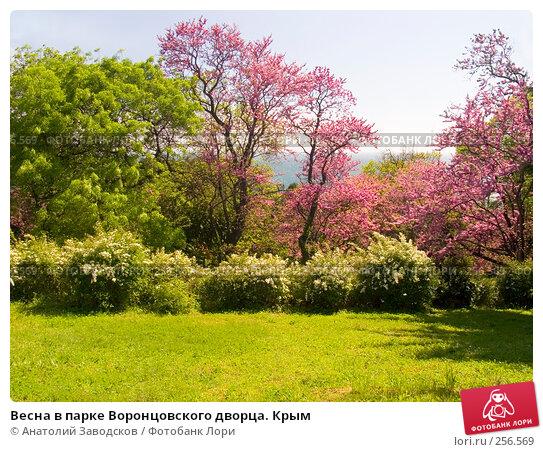 Купить «Весна в парке Воронцовского дворца. Крым», фото № 256569, снято 8 мая 2005 г. (c) Анатолий Заводсков / Фотобанк Лори