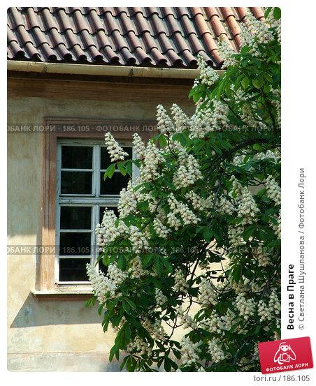 Весна в Праге, фото № 186105, снято 7 мая 2006 г. (c) Светлана Шушпанова / Фотобанк Лори