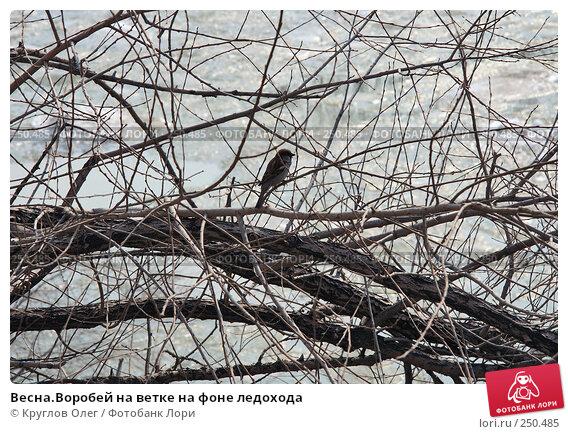 Весна.Воробей на ветке на фоне ледохода, фото № 250485, снято 25 января 2006 г. (c) Круглов Олег / Фотобанк Лори