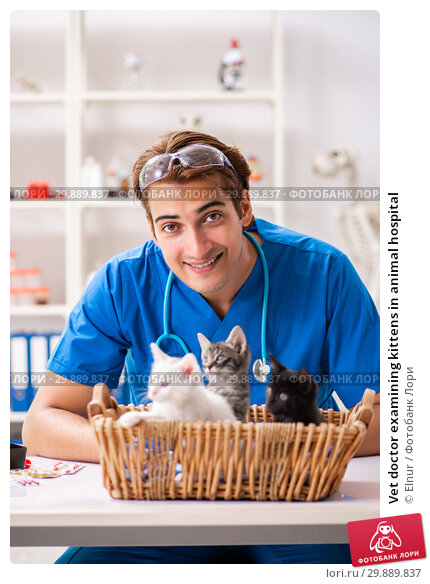 Купить «Vet doctor examining kittens in animal hospital», фото № 29889837, снято 27 августа 2018 г. (c) Elnur / Фотобанк Лори