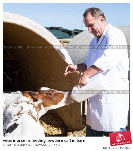 veterinarian is feeding newborn calf in barn. Стоковое фото, фотограф Татьяна Яцевич / Фотобанк Лори