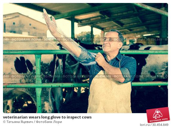 veterinarian wears long glove to inspect cows. Стоковое фото, фотограф Татьяна Яцевич / Фотобанк Лори