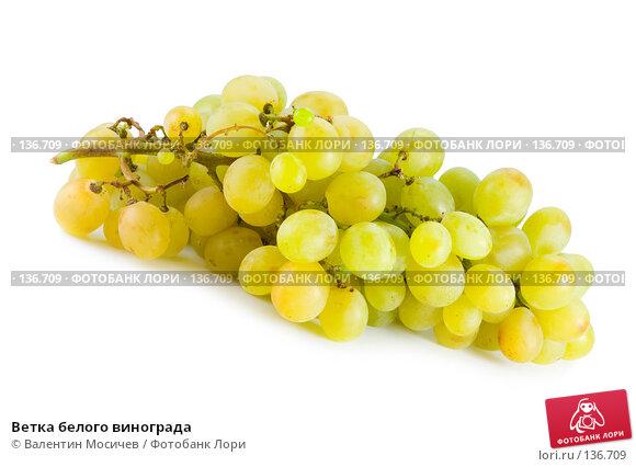 Ветка белого винограда, фото № 136709, снято 14 октября 2007 г. (c) Валентин Мосичев / Фотобанк Лори