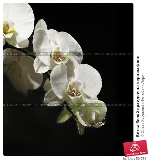 Купить «Ветка белой орхидеи на черном фоне», фото № 50789, снято 3 марта 2007 г. (c) Ольга Хорькова / Фотобанк Лори
