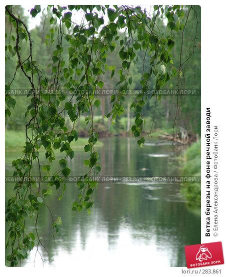 Ветка березы на фоне речной заводи, фото № 283861, снято 24 июня 2006 г. (c) Елена Александрова / Фотобанк Лори
