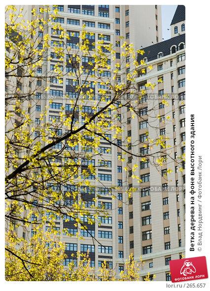 Ветка дерева на фоне высотного здания, фото № 265657, снято 27 апреля 2008 г. (c) Влад Нордвинг / Фотобанк Лори
